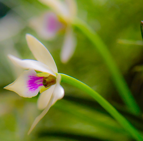 ORCHID SHOW 19