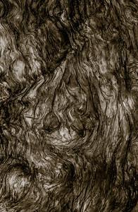 Sepia Wood