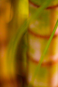 Yellow Brown Green