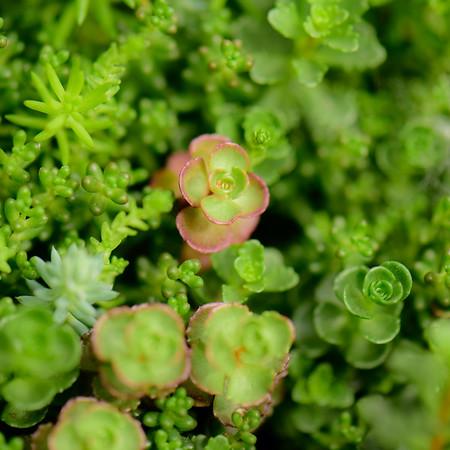 Succulent Plants 5