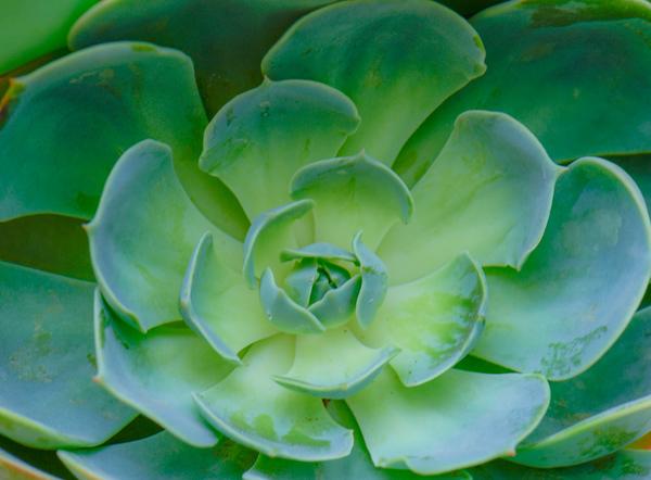 Succulent Plants 18