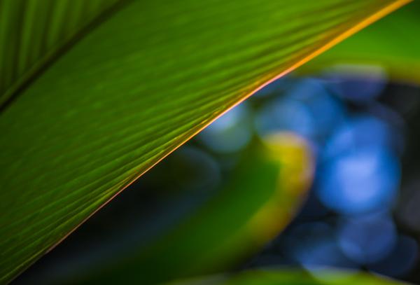 Tropical Garden 23