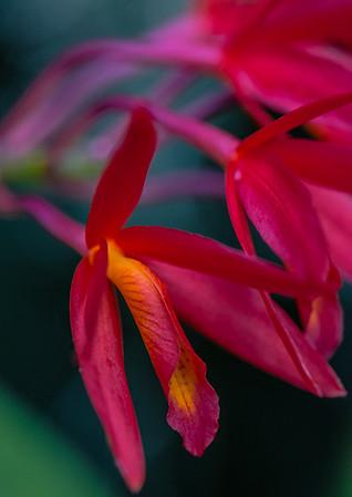 Tropical Garden 3