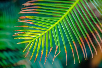 Tropical Garden 21