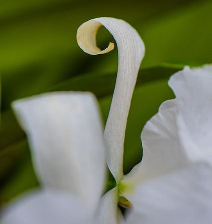 Tropical Garden 13