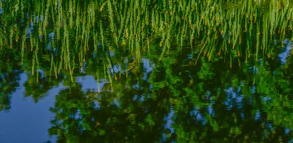WATER GARDEN  20