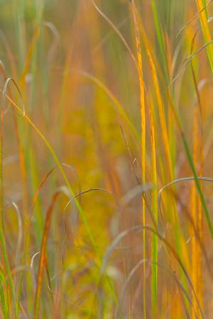 AUTUMN GRASS   7