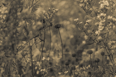 AUTUMN GRASS   10