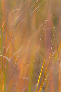 AUTUMN GRASS   3