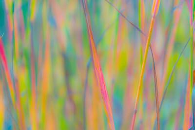 AUTUMN GRASS   5