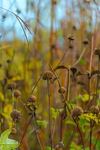 AUTUMN GRASS   14