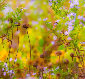 AUTUMN GRASS   2