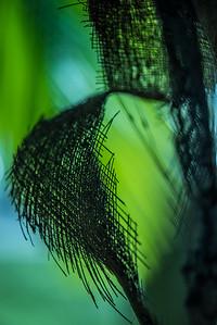 Palms Fronds 59