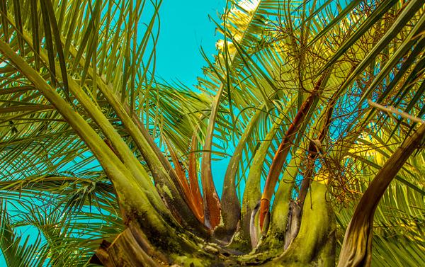 Palms Fronds 18
