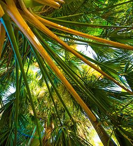 Palms Fronds 51
