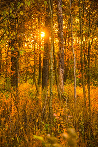 Autumn Wood 1