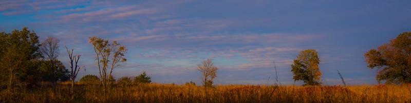 Autumn Field 19