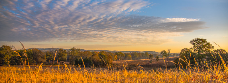 Autumn Field 6
