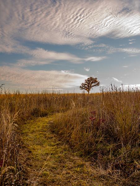 Autumn Field 18
