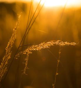 Autumn Field 3