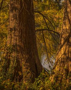 Autumn Lake 52
