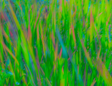 GRASS COLORS  12