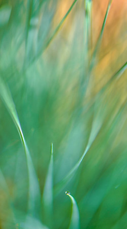 GRASS COLORS  11