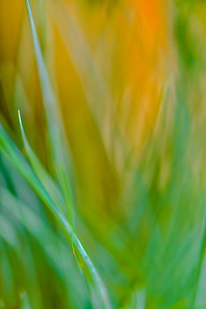 GRASS COLORS  19