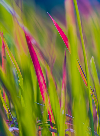 GRASS COLORS  10
