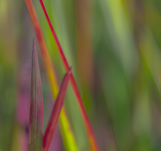GRASS COLORS  16