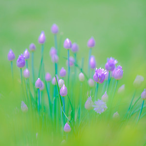 GRASS COLORS  6