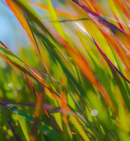 GRASS COLORS  21