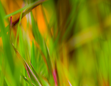 GRASS COLORS  14