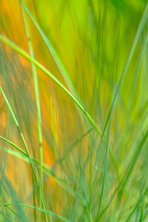GRASS COLORS  24