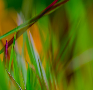 GRASS COLORS  5
