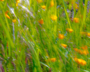 GRASS COLORS  2