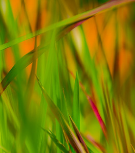 GRASS COLORS  17