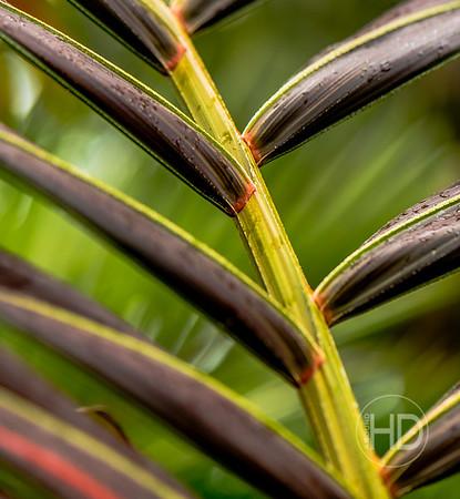 Palm Art   4