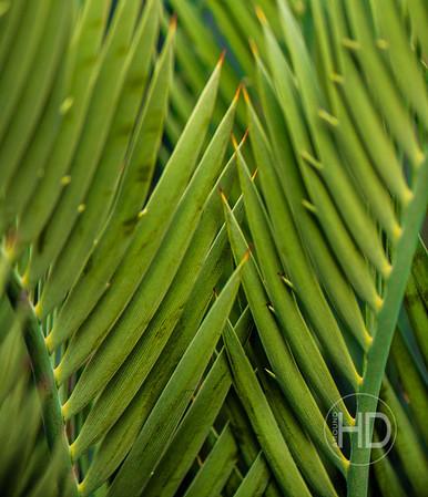 Palm Art   19