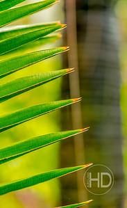 Palm Art   2