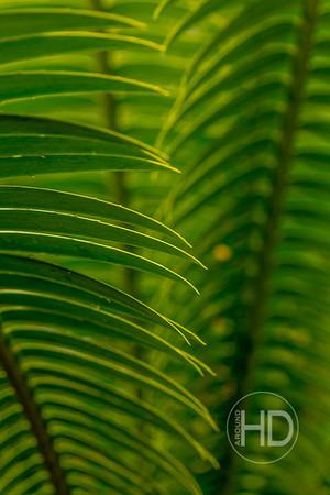 Palm Art   16