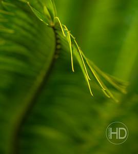 Palm Art   12