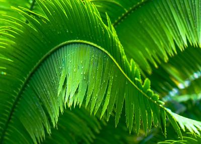 Palm Art   8