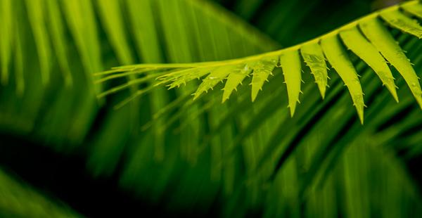 Palm Art   22
