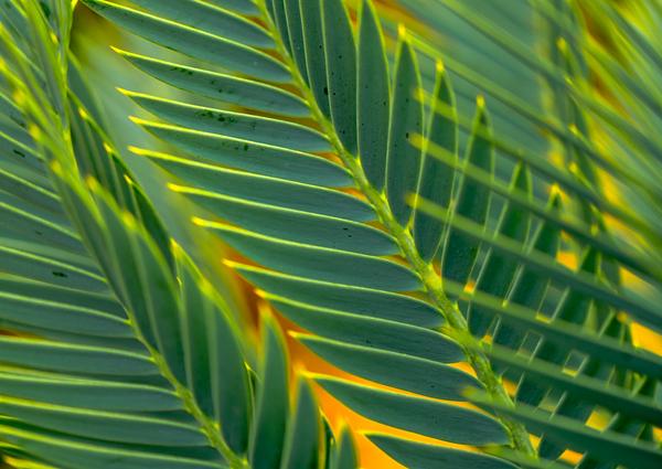 Palm Art   14