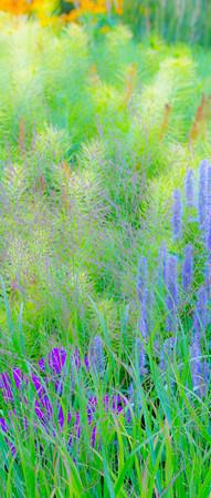 July grass 2014  21