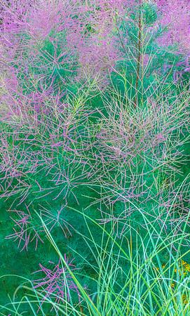 July grass 2014  25