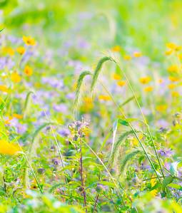 july grass 2014  4