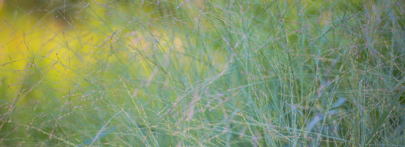 july grass 2014  2