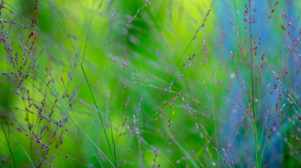 July grass 2014  29